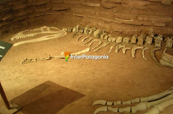 Remains of the Gigantosaurus - Villa El Choc�n