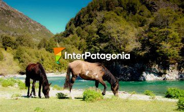 Touring around Alto Palena on horseback
