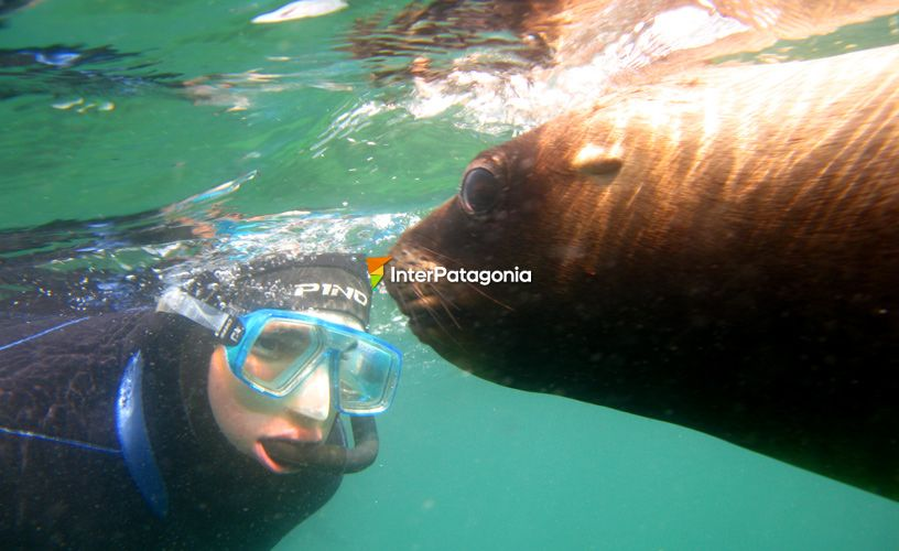 Diving with sea mammals
