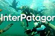 SCUBA Diving with Sea Lions at Puerto Madryn