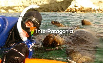 SCUBA Diving and Snorkeling with Sea Lions at Puerto Madryn