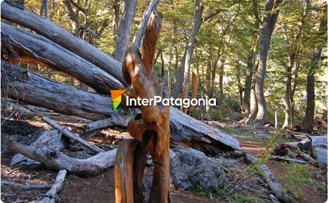 The Carved Forest in El Bols�n