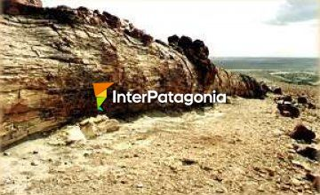 Jaramillo Petrified Forest