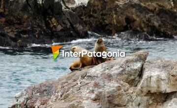 Cormorants and Sea Lions in Cabo Blanco