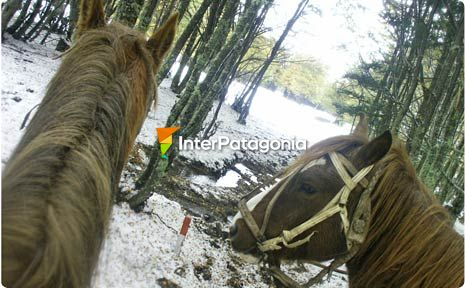 Horseback Excursion at Mount Fenton