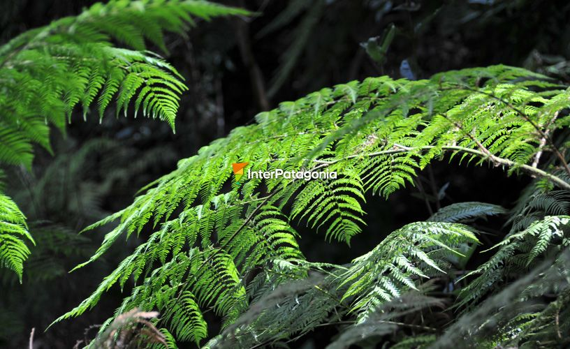 The ferns were sheltered