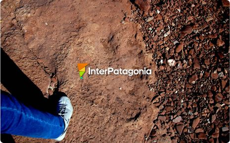 Dinosaur Tracks at El Chocón
