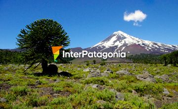 Conguillio, a Volcano-encircled National Park