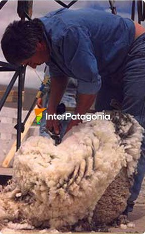 National Shearing Fair - Río Mayo