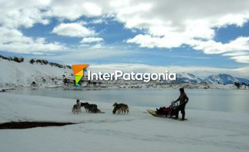 Dog sled rides at Caviahue