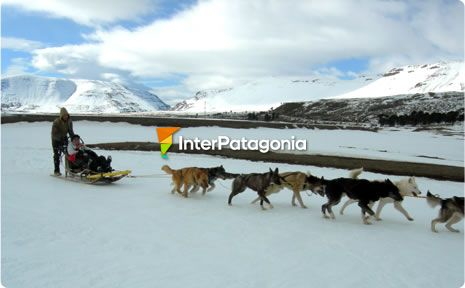 Snow sled pulled by dogs at Caviahue