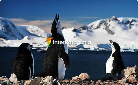 Penguins in Antartica