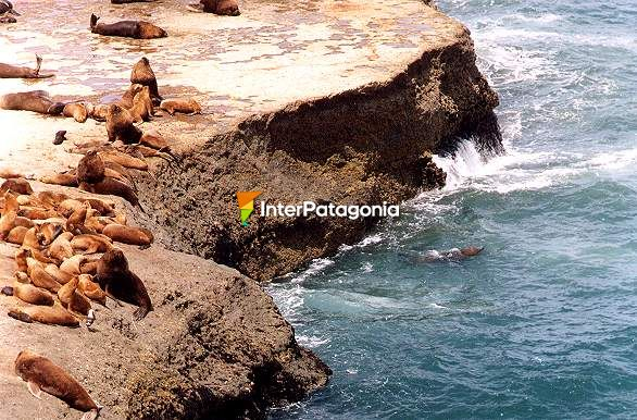 Elephant seals colony - Puerto Pir�mides