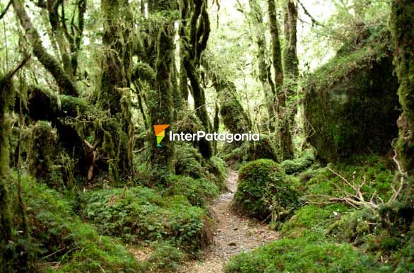 Unexplored and unspoiled, Queulat National Park - Puyuhuapi