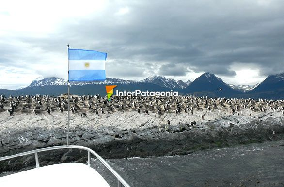King cormorant colony, Argentinian Patagonia