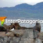 Sea lions in Ushuaia