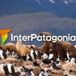 Sea lions in Patagonia