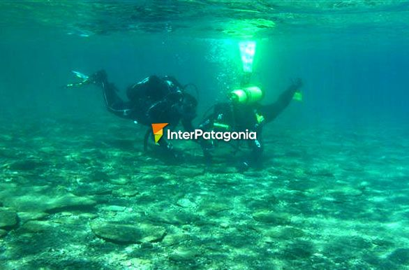 SCUBA diving in the Nahuel Huapi