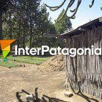 Fotos de villa pehuenia moquehue fotos e im genes de for Viveros en salto